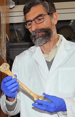Antonio Rosas sostiene un fémur de neandertal.