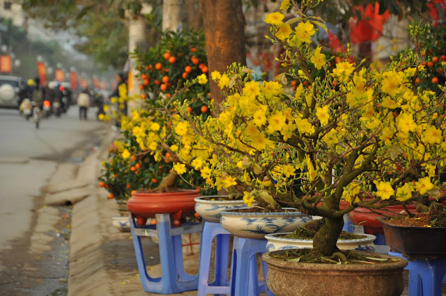 Spring flower market in the days near Tet in Vietnam