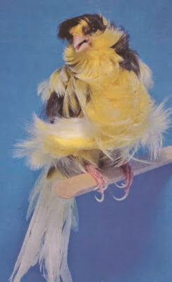 Parisian Frilled Canary
