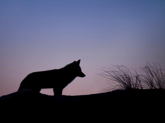 gesehen KW 28 - Wölfe bzw. die trophische Kaskade