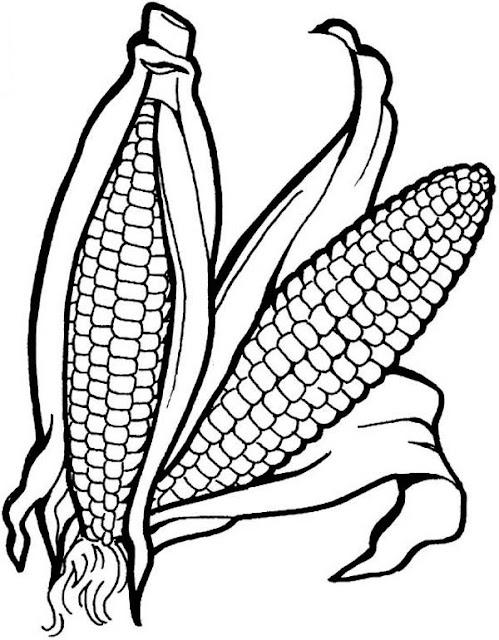 mazorca de maiz dibujo