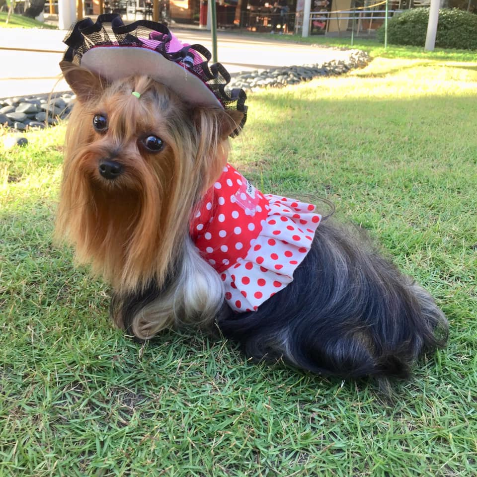 Pet Fashion and Trends Philippines: Dogs in the High Street!
