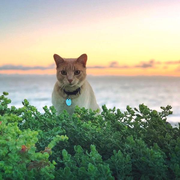brighton beach cat