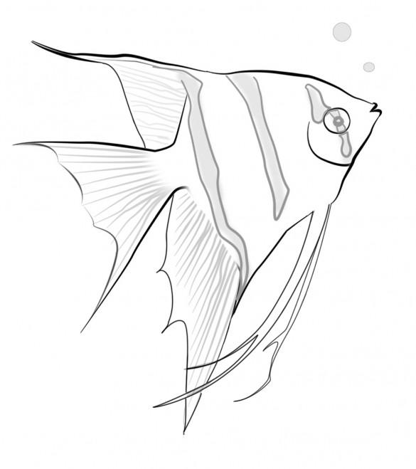 Sketsa Gambar Hewan Hitam Putih
