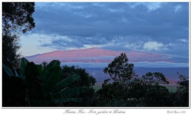 Mauna Kea: From gardens in Waimea