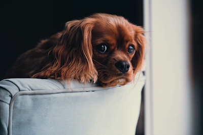 House Hunting and Moving With Your Dog