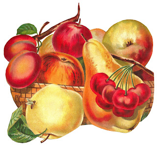 fruit botanical artwork illustration digital download