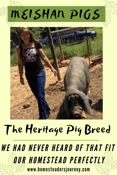 The Heritage pig breed perfect for our homestead: Meishan pigs