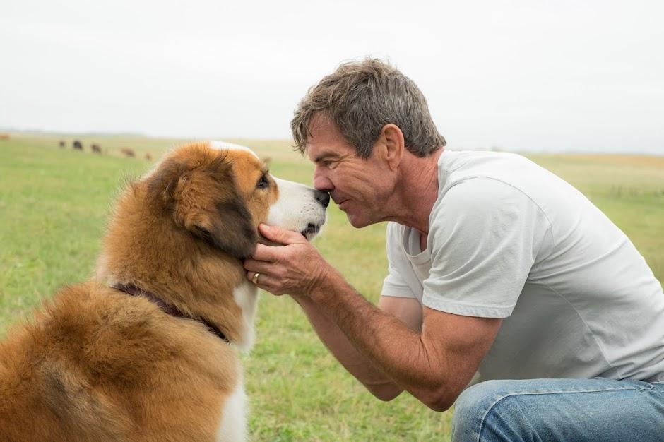 A Jornada de um Cachorro