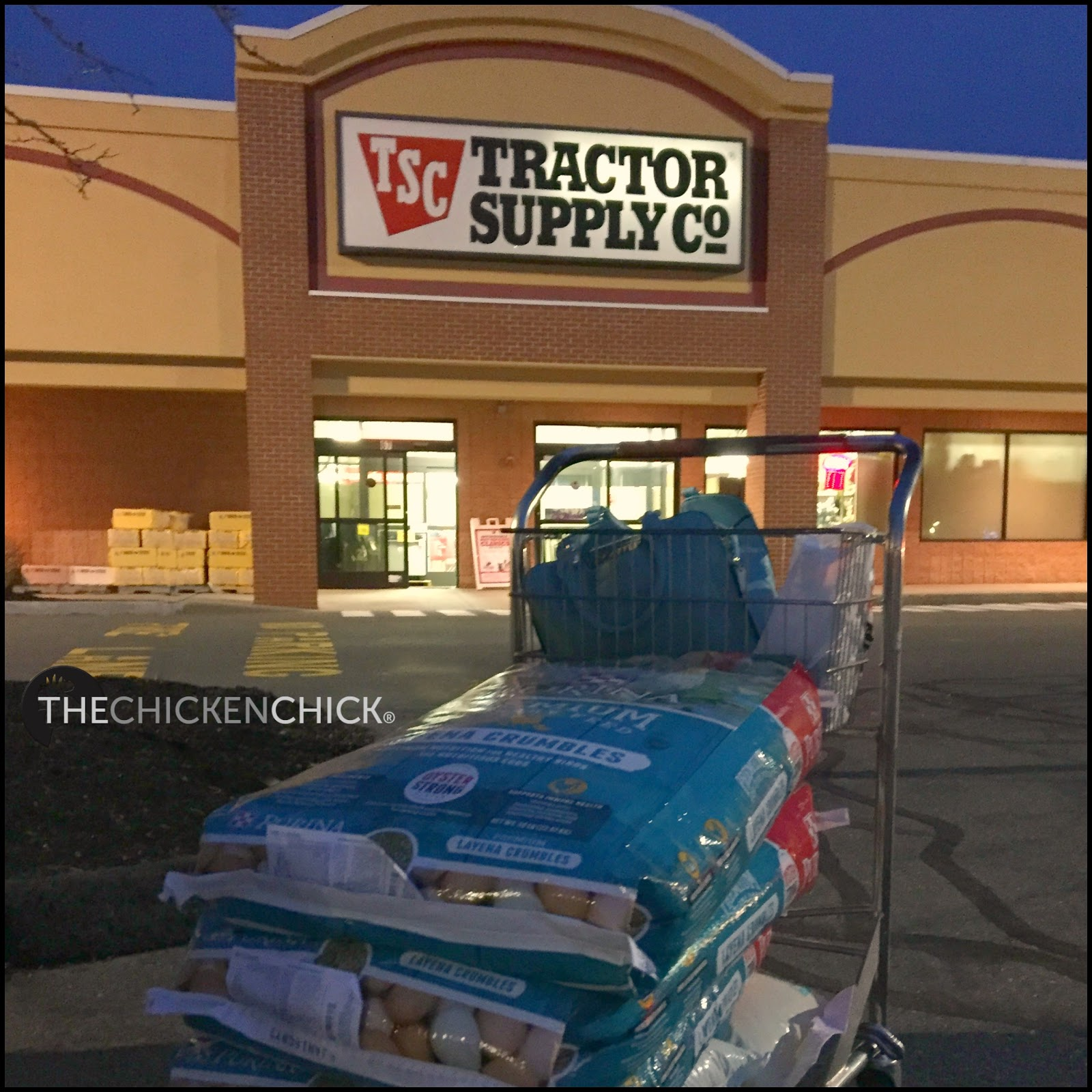 Tractor Supply: The Chicken Chick®: Buying Chickens To Start A Laying Flock