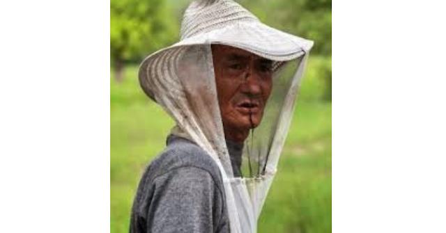 Τα εισαγώμενα μέλια της Ελλάδας