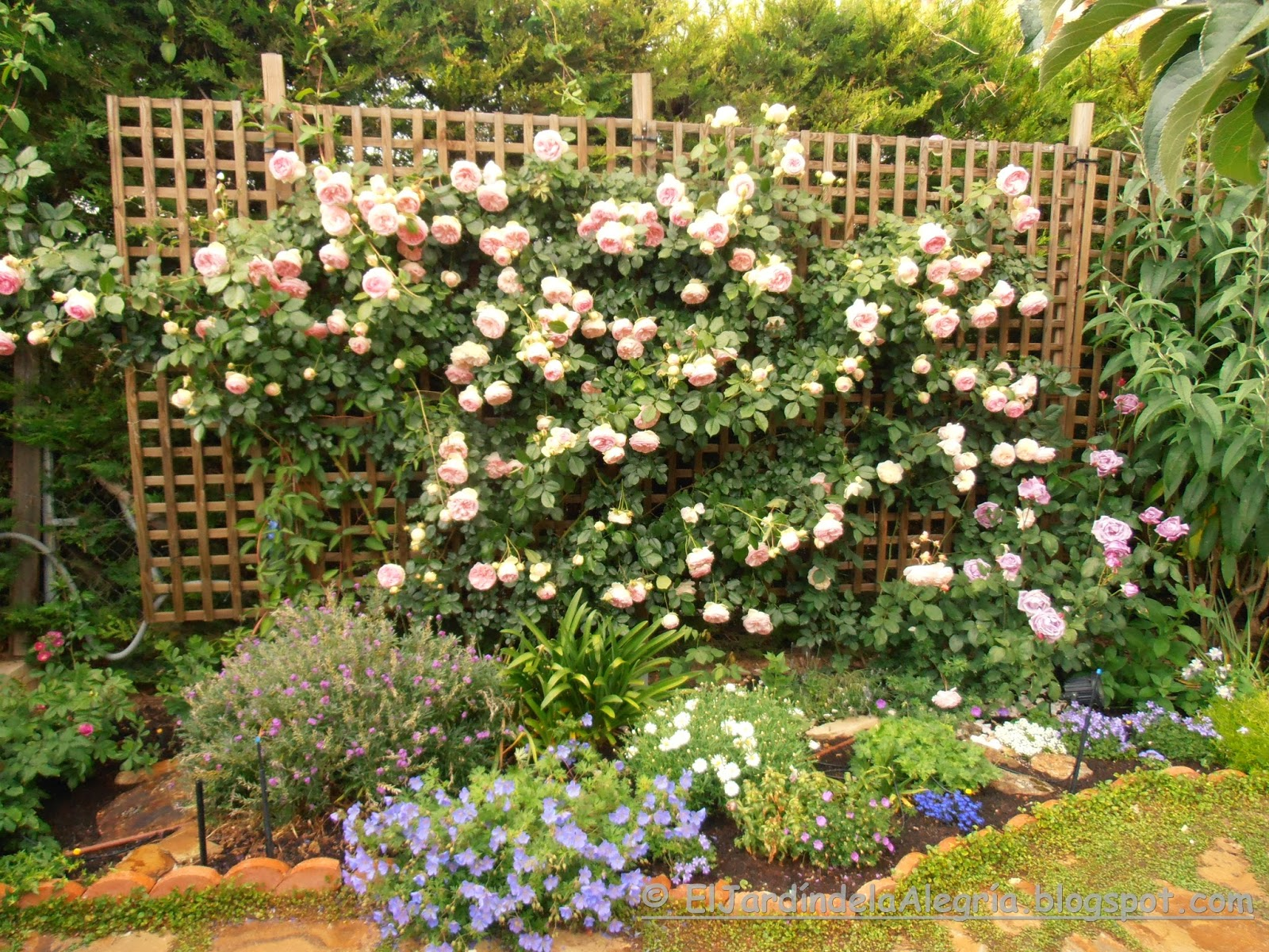 el jard n de la alegr a c mo se podan los rosales