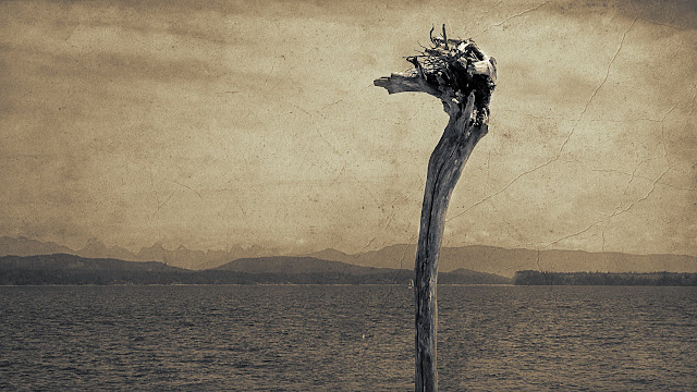 Driftwood on Quadra Island, BC...