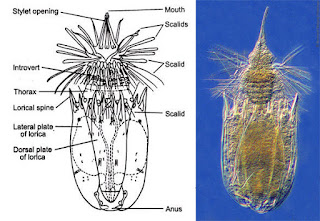 largest phylum in kingdom animalia, kingdom animalia phylum kelas ordo, kingdom animalia phylum list, kingdom animalia phylum chordata lyrics, largest phylum of kingdom animalia, largest phylum under kingdom animalia, largest phylum among kingdom animalia, kingdom animalia phylum mammalia, kingdom animalia phylum mollusca class cephalopoda