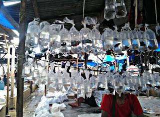Pasar Ikan Hias Jakarta Parung
