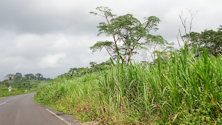 Moist lowland forests ecoregion covers all of south Bioko