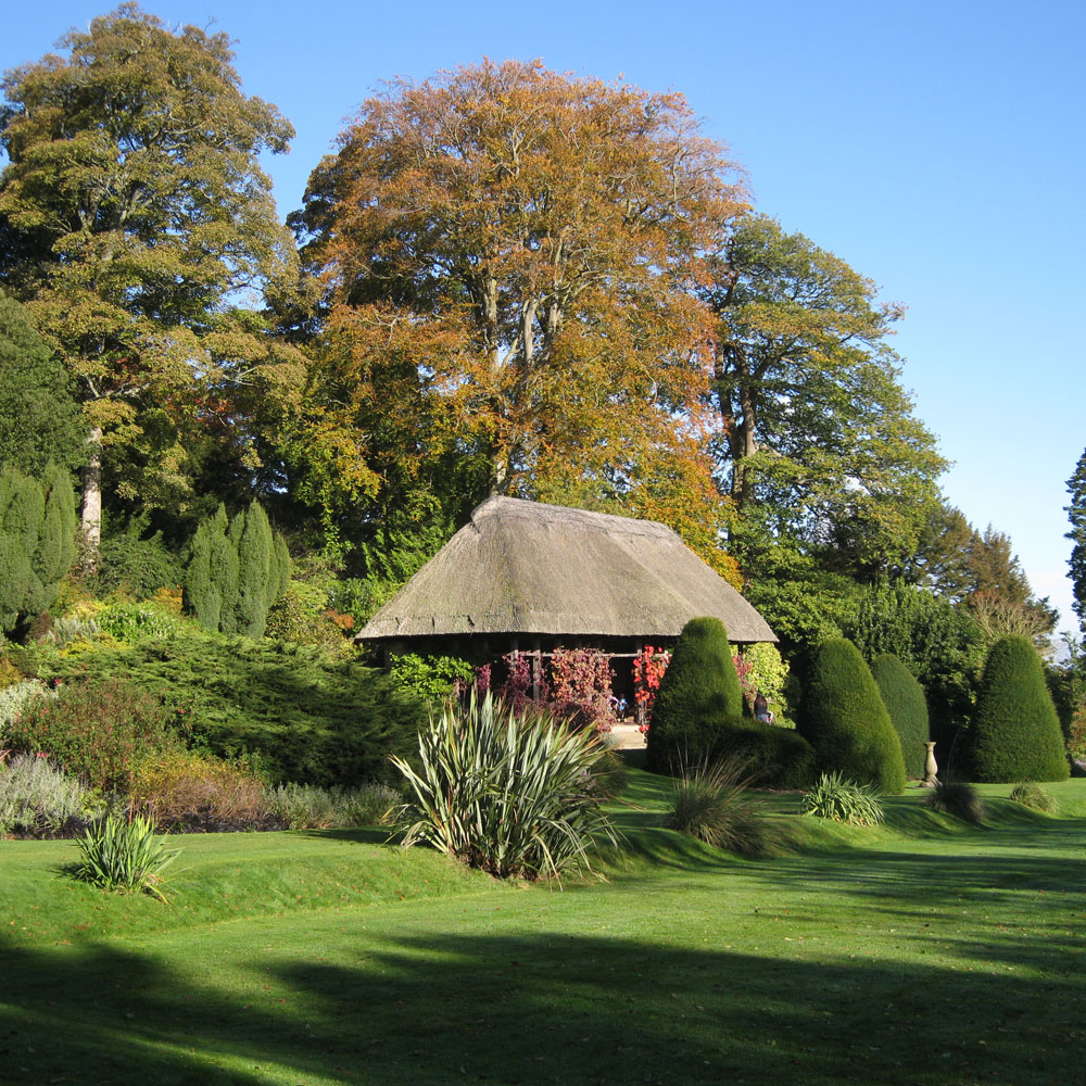 Small Trees For Borders: Acornmoon: October 2012