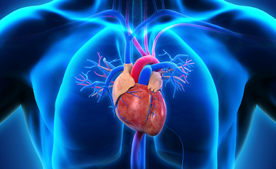Epidemiology & Pathophysiology of Cardiovascular Disease | Wellness Clinic