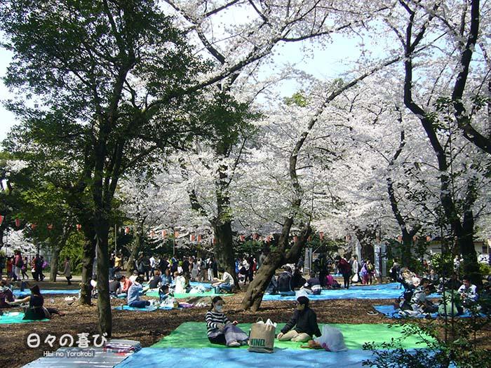 vue pique nique hanami baches bleues ueno park