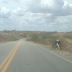 Motoristas denunciam animais soltos na estrada que liga Pintadas a Ipirá