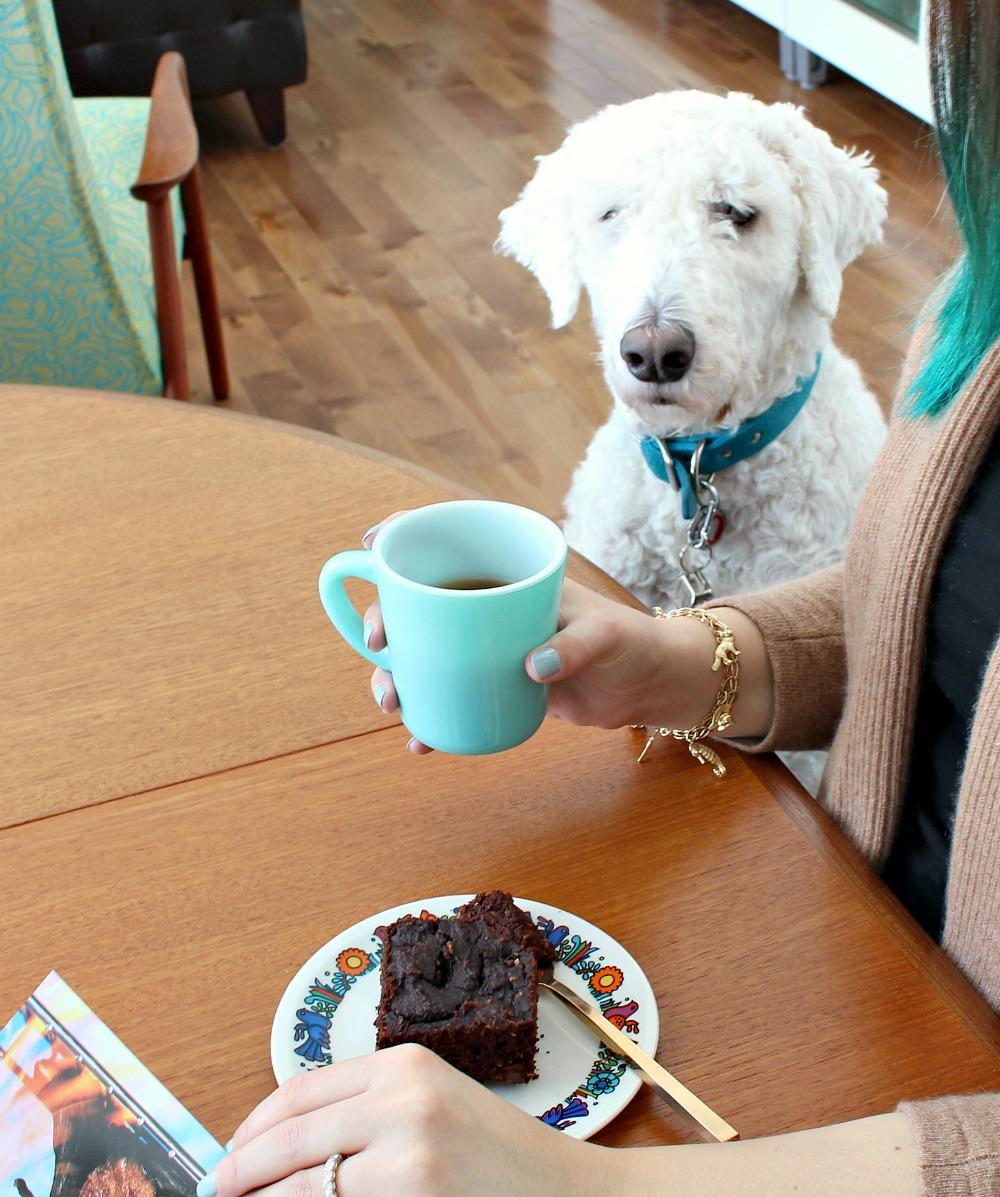 Dog Wants My Chocolate Cake!