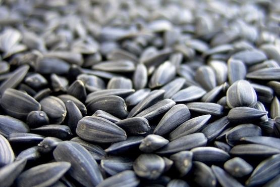 3 bons remédios caseiros para enxaqueca - Chá de semente de girassol