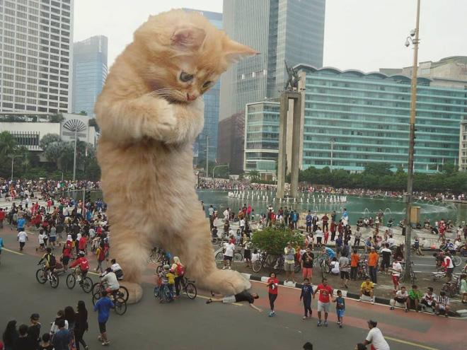 12 Gambar Gelagat Kucing Comel Di Kawasan Bandar