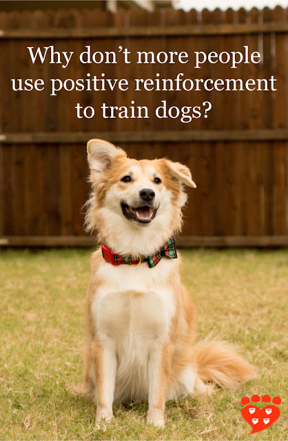 A dog sits for a treat. Why don't more people train dogs with positive reinforcement? Research investigates.