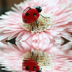 ladybugs--they are GOODLUCK