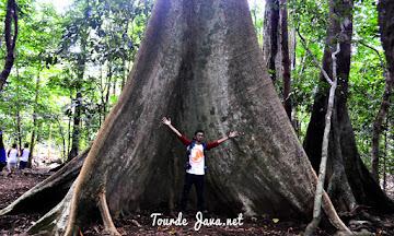trekking pulau pecang salah satu aktivitas wisata ujung kulon
