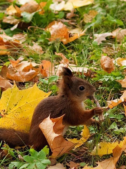 Najbolje slike s vjevericama