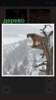 высоко на дереве сидит тигр и под ним холмы и равнины