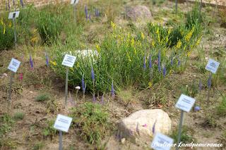 Wildblumen IGA
