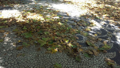 (Almost) Wordless Wednesday - falling leaves already?
