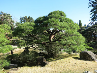 trees, Rinnoji Temple Garden, Japan