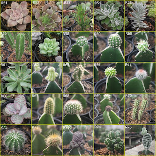 bibit-kaktus-dan-sukulen.jpg
