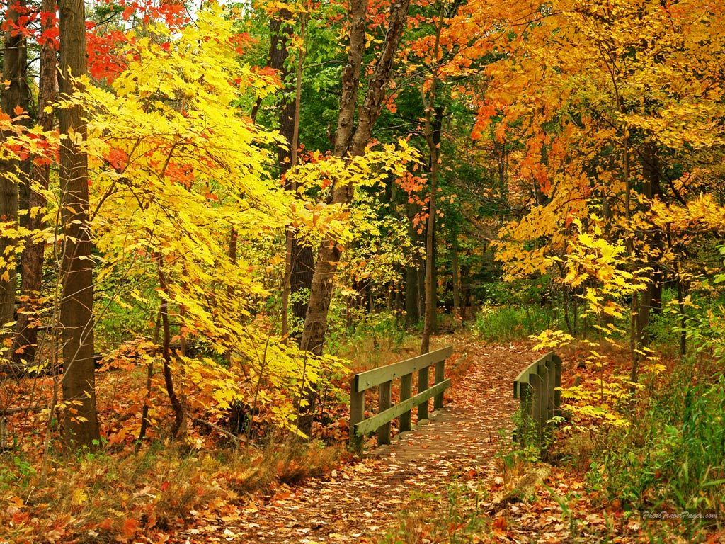 Autumn Wallpapers HD: Beautiful Autumn Wallpapers HD