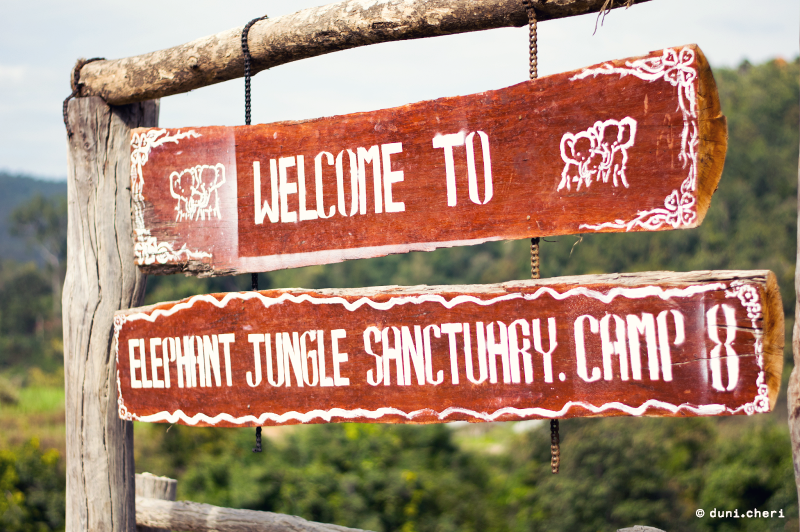 elephant jungle sanctuary camp chiang mai