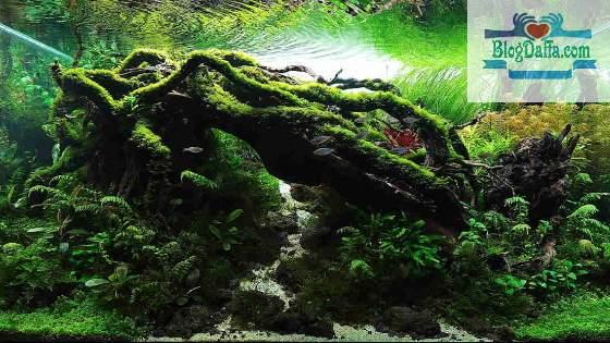 Tema Aquascape Biotop