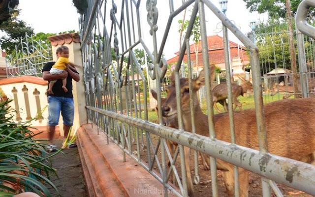 Hiburan alternatif anak-anak di Jepara, melihat penangkaran rusa depan pendopo