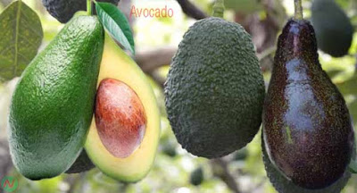 avocado fruit; abocado