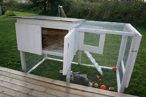 gambar kandang kelinci hias
