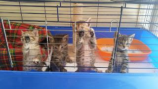 Loro sono: Piero, Milo, Saretta e Sofia. 1