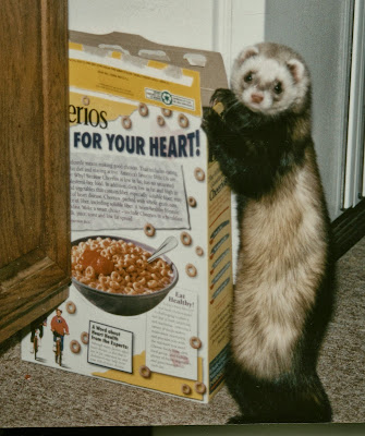 Ferret in the Cheerios