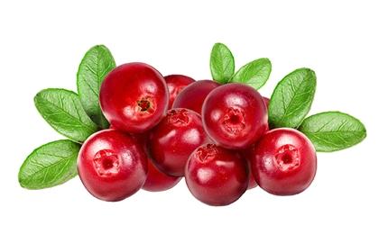 แครนเบอร์รี่ (Cranberry) @ www.natural-health-news.com