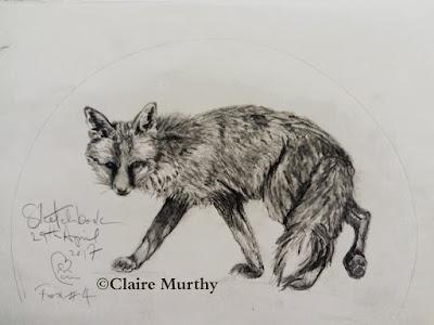Wildlife drawing and sketching