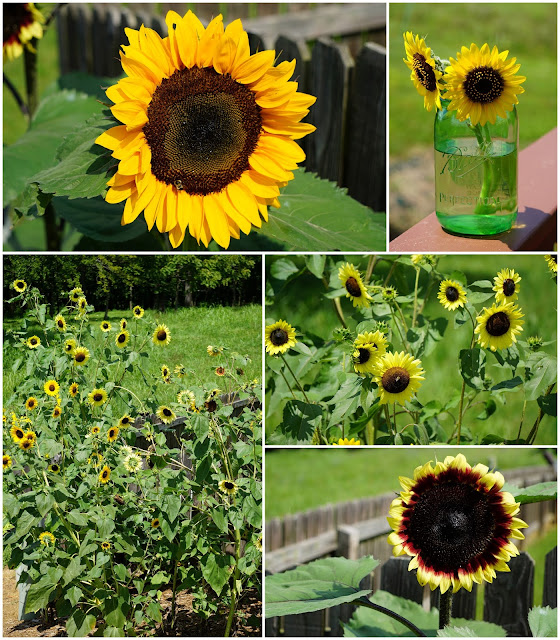 Our Sunflower Patch