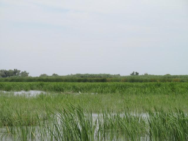 delta dunarii vegetatie