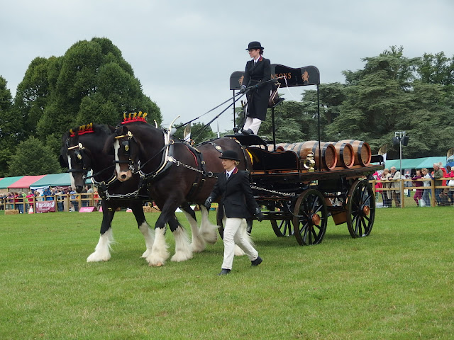 Robinson's shire horses strutting their stuff