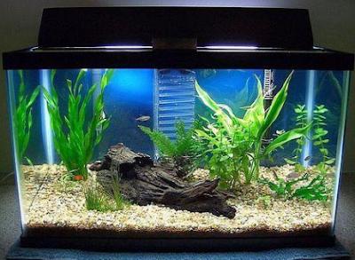 Cara jitu merawat aquarium agar selalu bersih